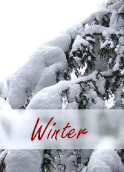 Winter Photo Gallery